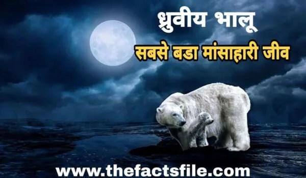 Polar Bear in Hindi | ध्रुवीय भालू के बारे में 15 रोचक तथ्य
