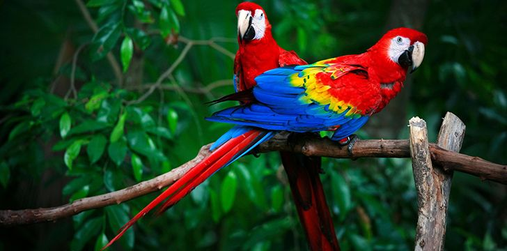 30 colorful facts about