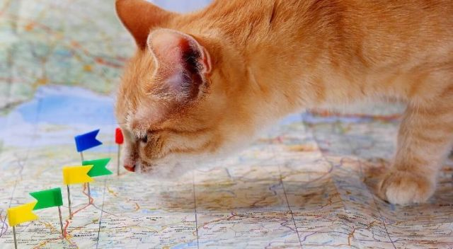 A ginger cat standing on a map with pin-point flags