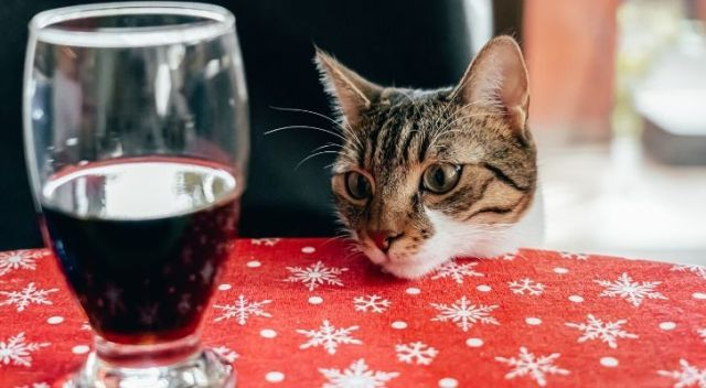 A cat looking at a glass of red wine