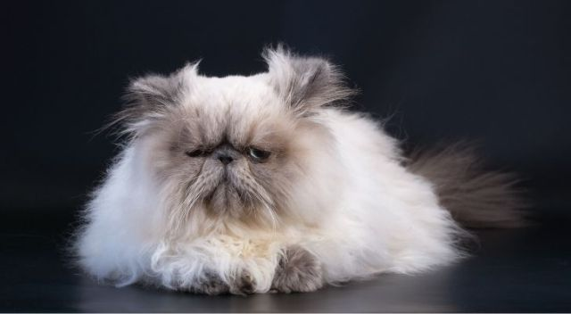 A fluffy cat sat on the floor looking grumpy