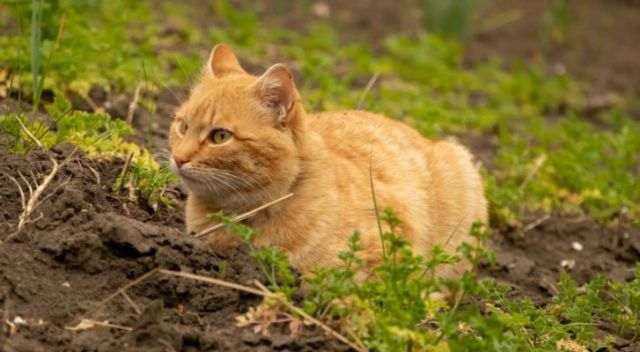 A cat chilling on a farm surrounded by vegetation