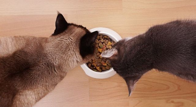 Two cats eating from the same bowl