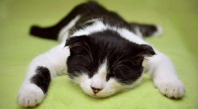 A black & white cat sprawled out, sleeping on a green cloth