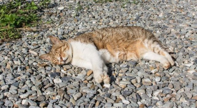 A cat sprawled out on a stone driveway