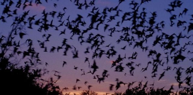 Lots of bats in the sky