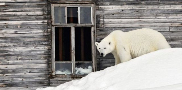 The polar bears invaded Russia once again later in 2019 too!
