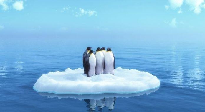 Three penguins on a small iceberg