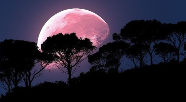 A full pink moon seen behind some trees in the dark
