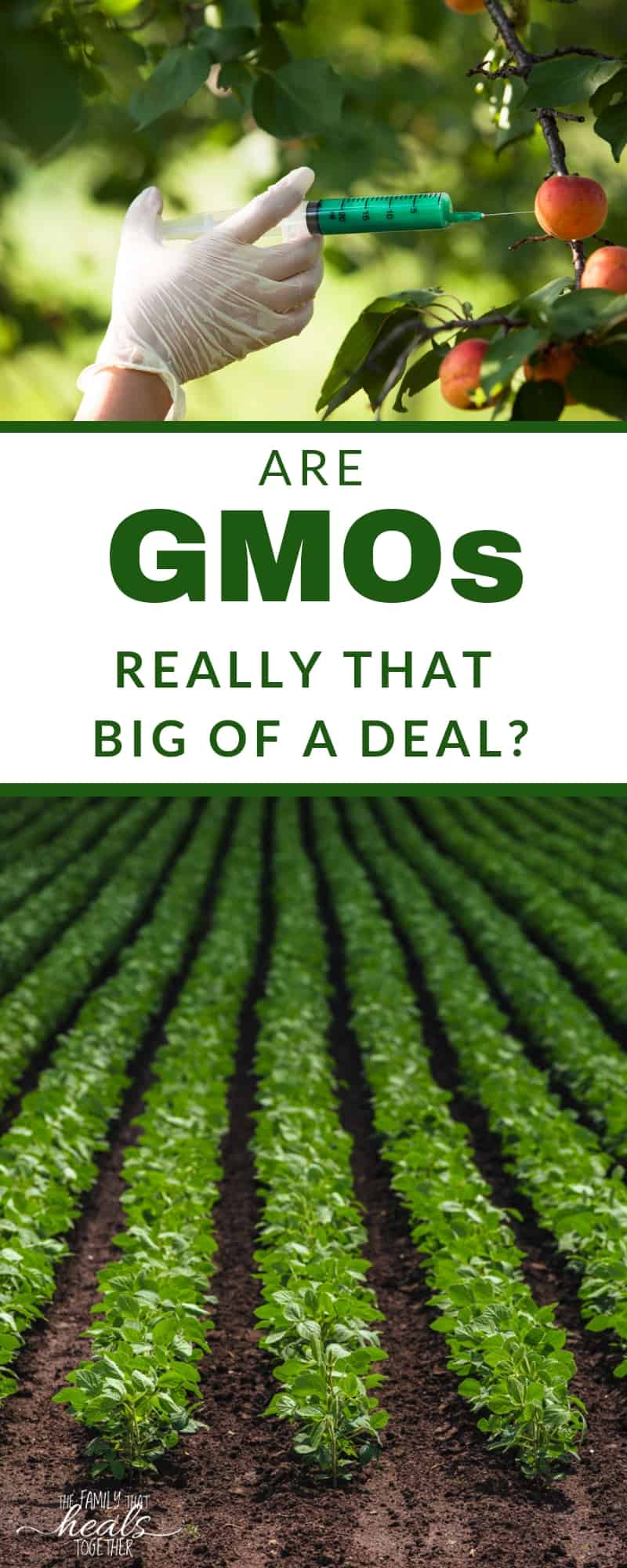 Are GMO dangers a real threat? Or are GMOs in food something that we can trust? Here, we explain the impact that GMO food can have on health. - data-recalc-dims=