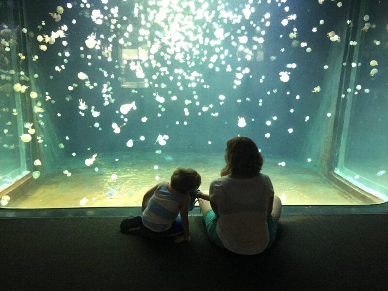 Vancouver aquarium in Stanley park