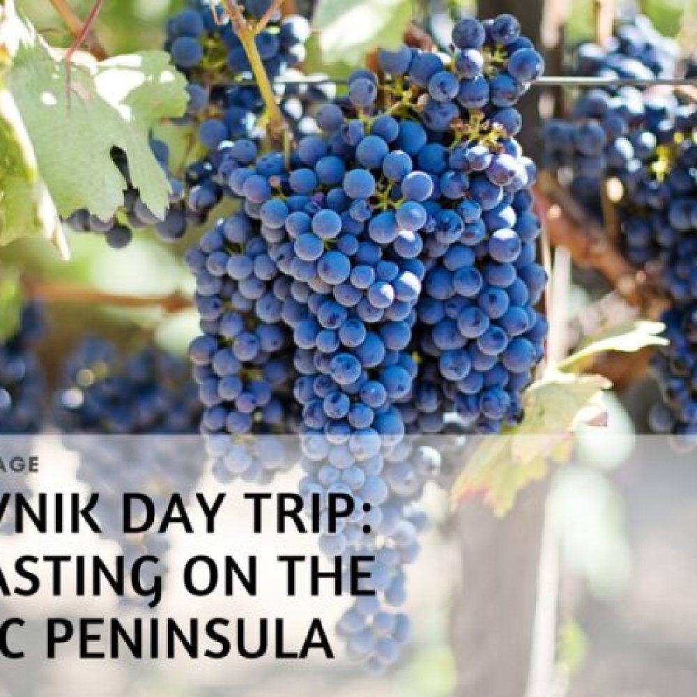 Tasting Peljesac Wine in Croatia, from the Plavac Mali grape to Dingac wine