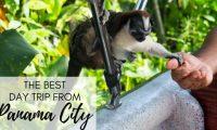 monkey island panama day trips