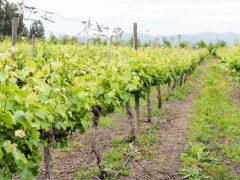 vino montgras colchagua valley chile