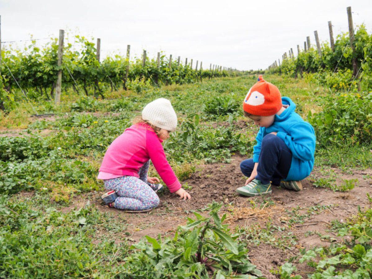 colchagua valley wine