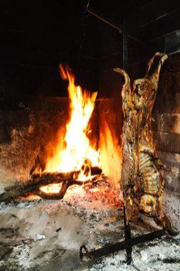 Patagonia animals-15