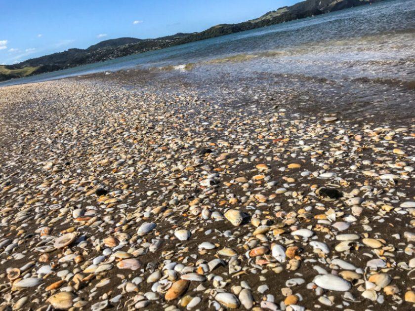 Whitianga Beach New Zealand
