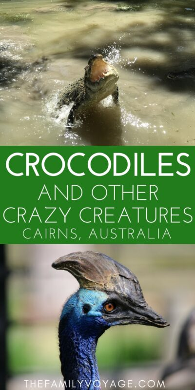 Australia is home of some of the world's most unique creatures. Want to see (almost) all of the famous Australian animals in one place? Check out Hartley's Crocodile Adventures, one of the best things to do in Cairns (and also accessible from Port Douglas and the rest of Far North Queensland). You'll see crocodiles, koalas, cassowaries and more! #Australia #Queensland #Cairns #PortDouglas #travel #familytravel