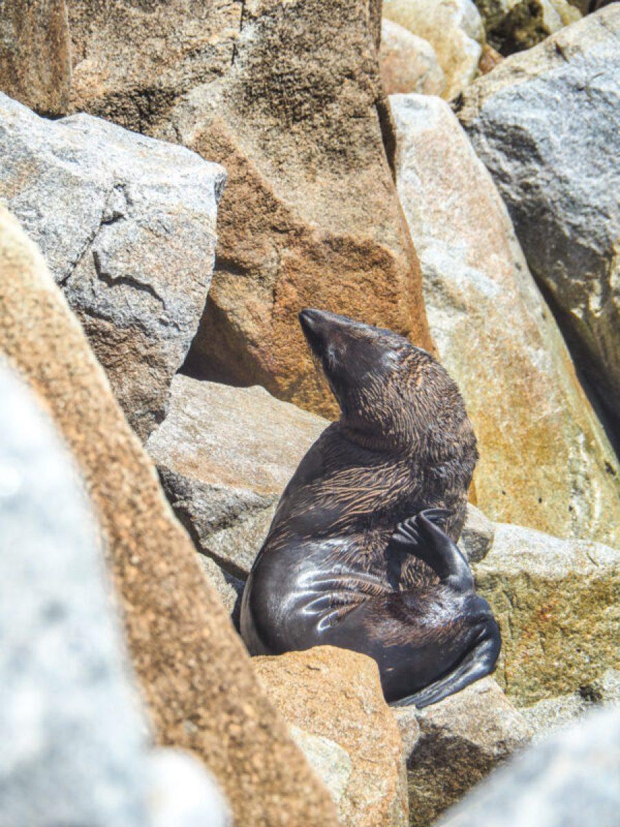 Narooma - where to see fur seals