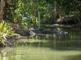 Cairns crocodile park