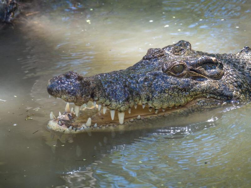 Cairns crocodile tour