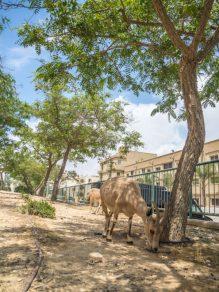 israel negev road trip-46