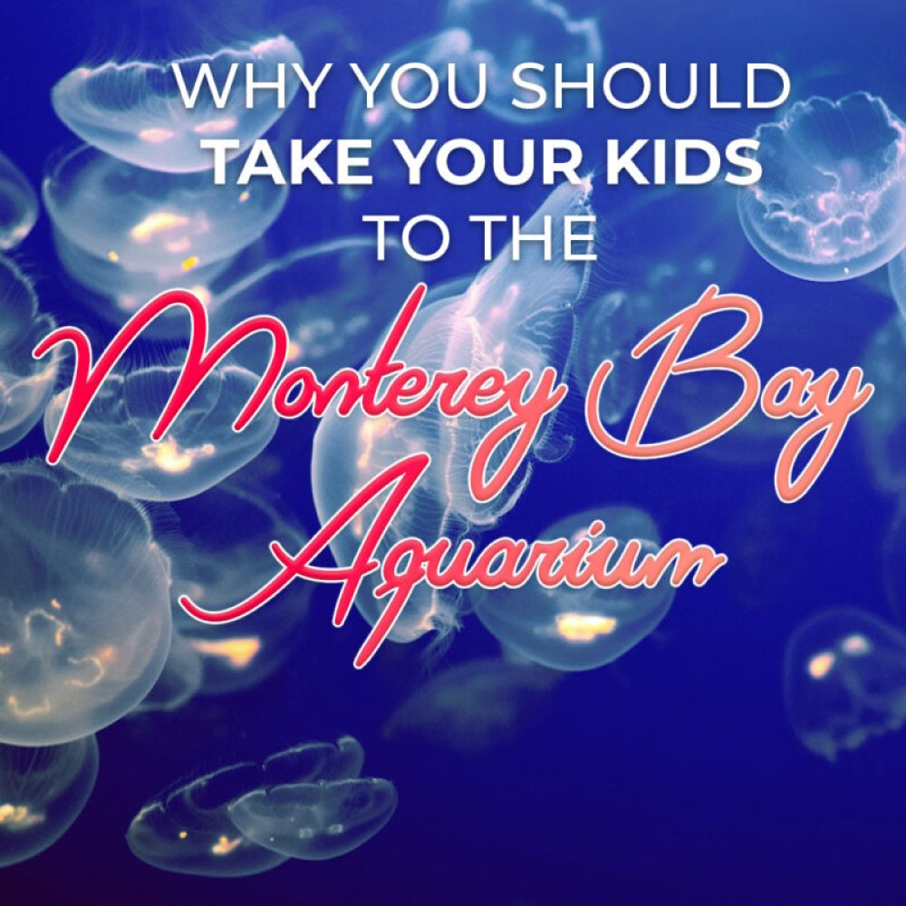 Why you should take your kids (or yourself) to the Monterey Bay Aquarium – at least once