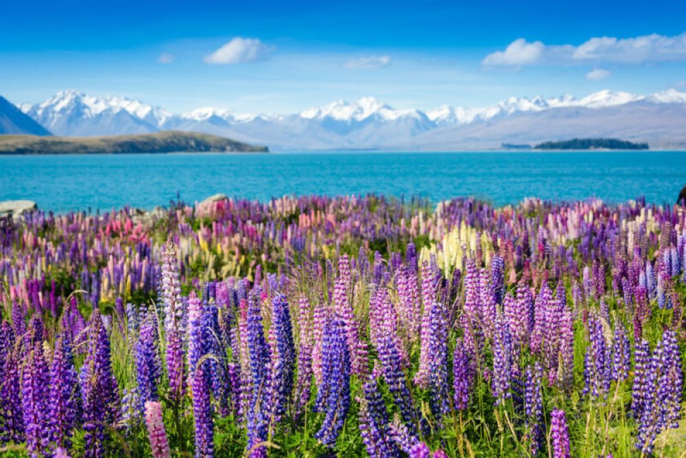 10 things to know before you visit New Zealand