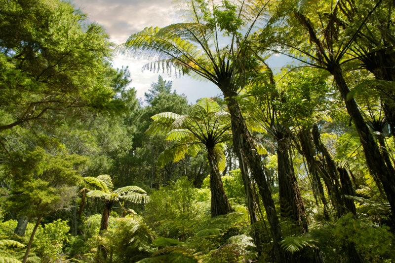 New Zealand rainforest on North Island