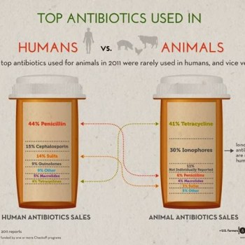 Top Antibiotics: Humans vs Animals