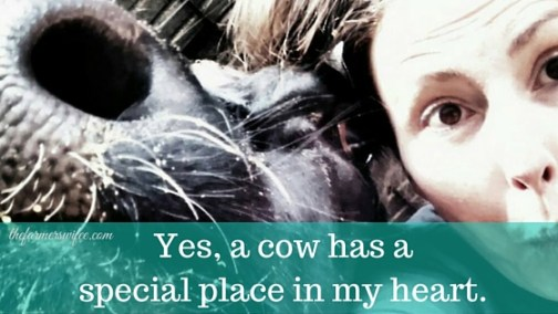 Yes a cow has a special place in my heart