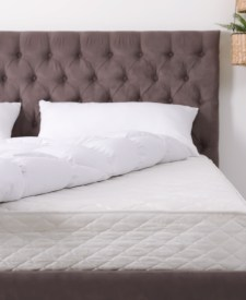 Eliminate Bed Bugs Get The Perfect Mattress The Fashionisto