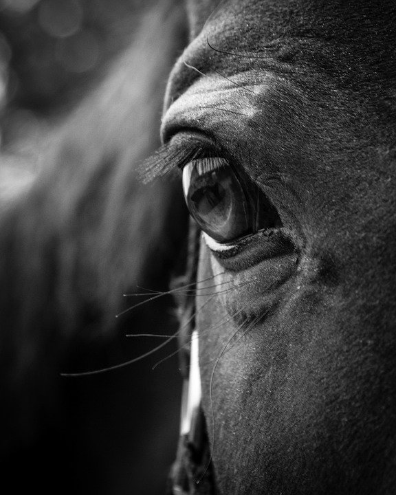 horse-2565584_960_7201262177708.jpg