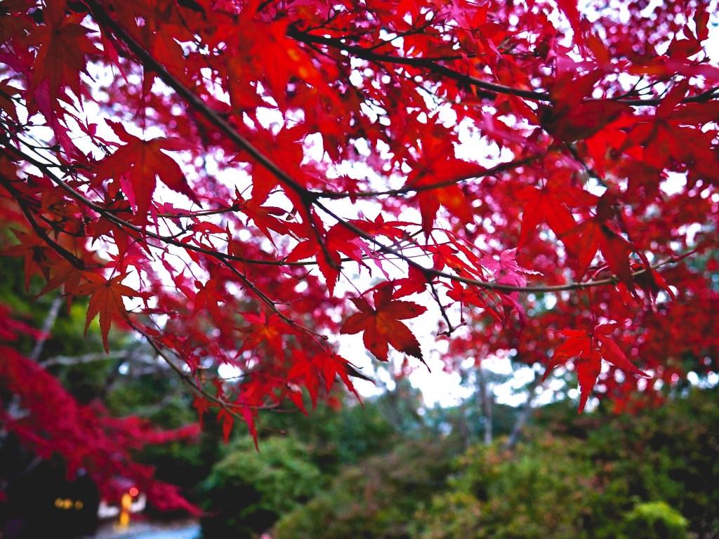 Kyoto photo diary