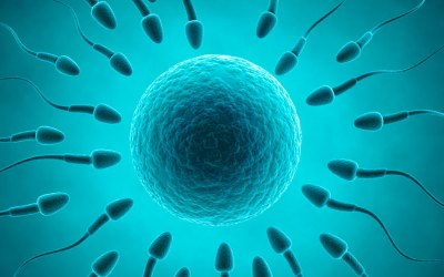 EP 79: Poor sperm doesn't have to lead straight to fertility treatment