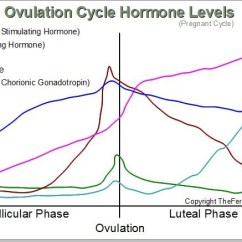 Menstrual Cycle Diagram With Ovulation Delta Monitor Shower Faucet The Female Hormone Levels Pregnant