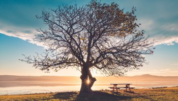 Sunlight bursts through a tree on the edge of lake Illawarra, Wollongong, Australia