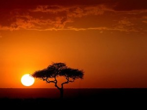 leave Kenya