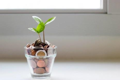 A money plant symbolising bank account growth