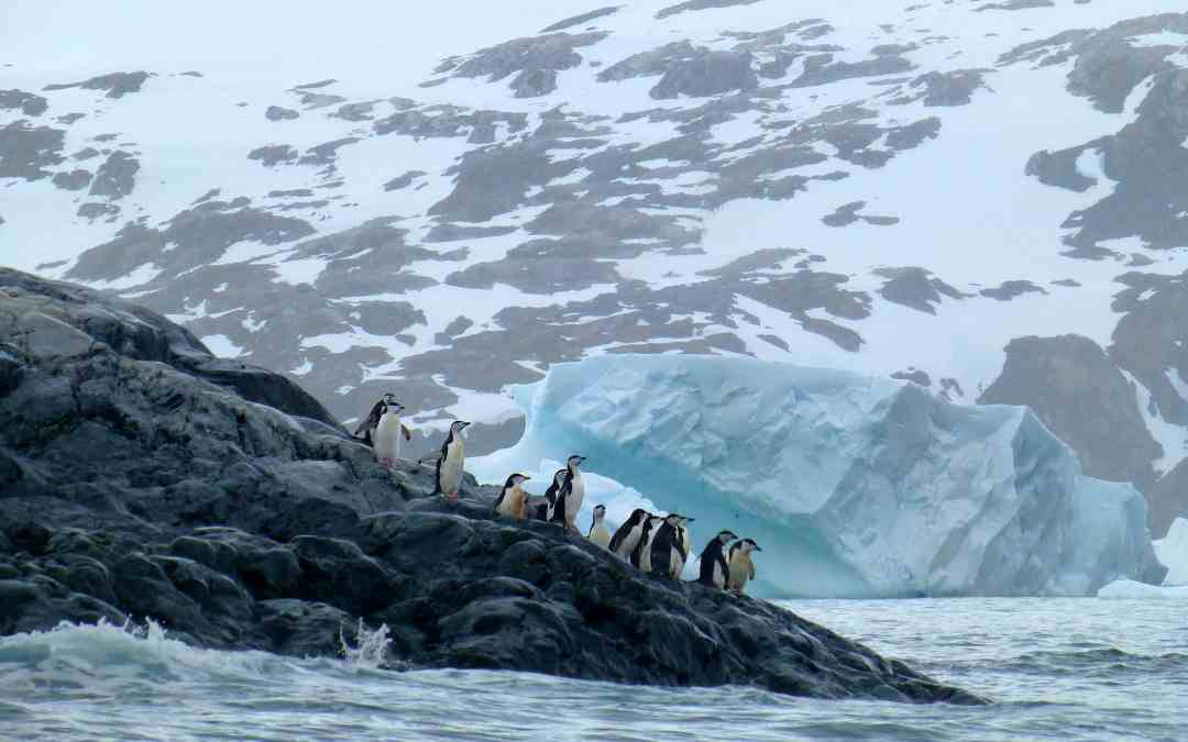 Zodiac Cruises and Penguin Colonies