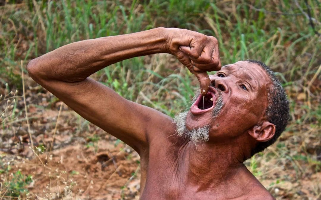 A Day in the Life of the San Bushmen