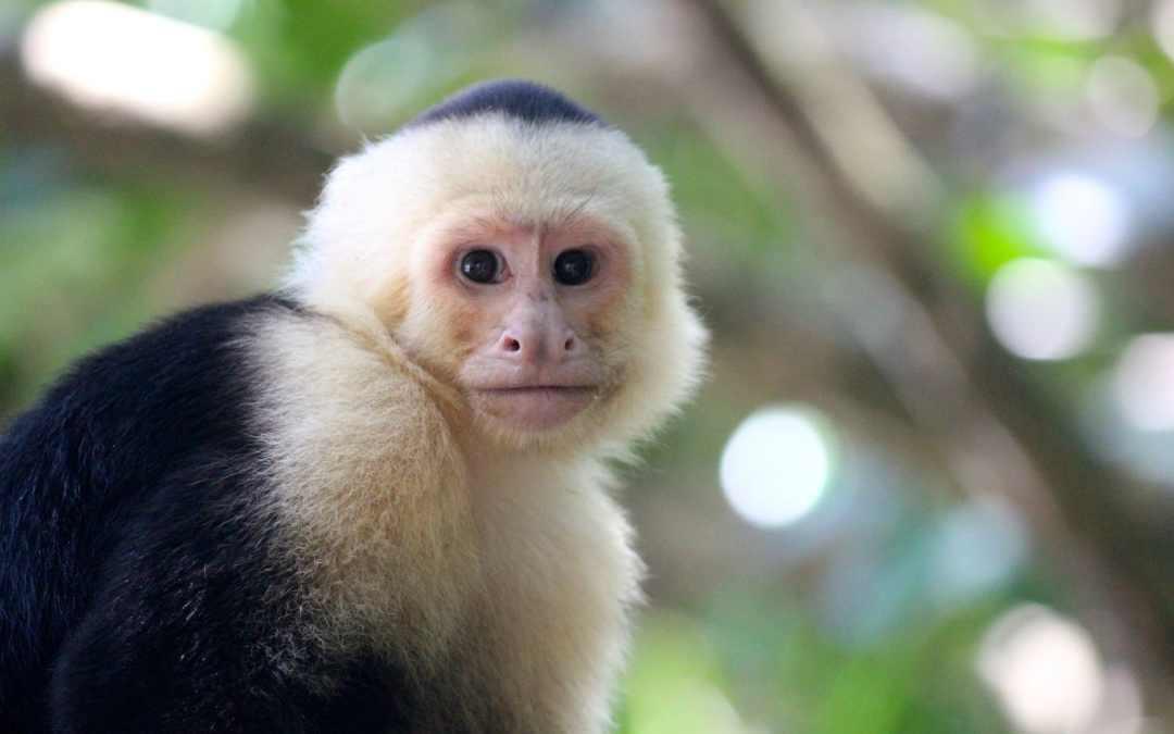 Parque Nacional Manuel Antonio: A Must See!