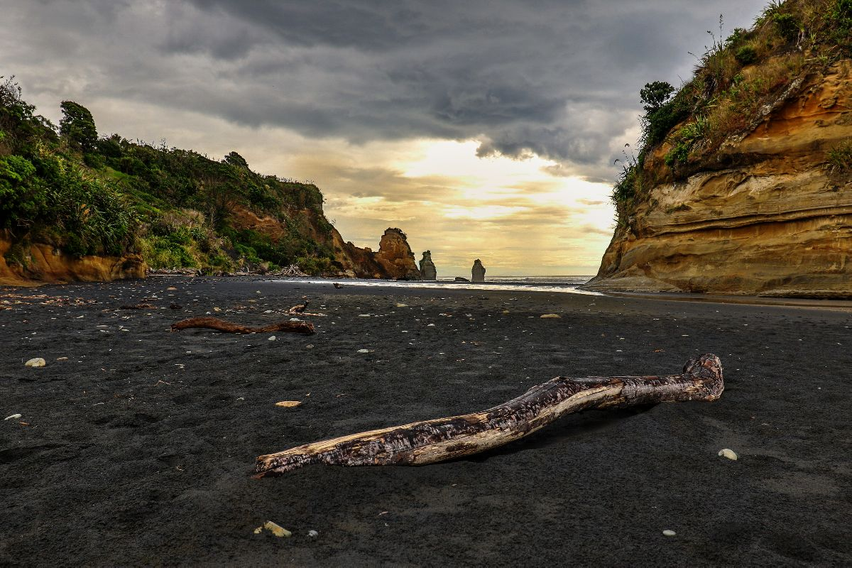 black sand beach with driftwood in new zealand