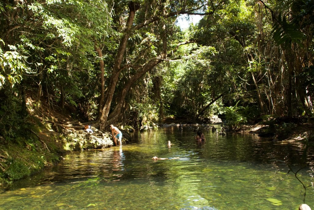 Two of the biggest attractions in Northern Queensland are the Daintree Rainforest and Cape Tribulation. Think you could see them both in one day? Read more at www.thefivefoottraveler.com