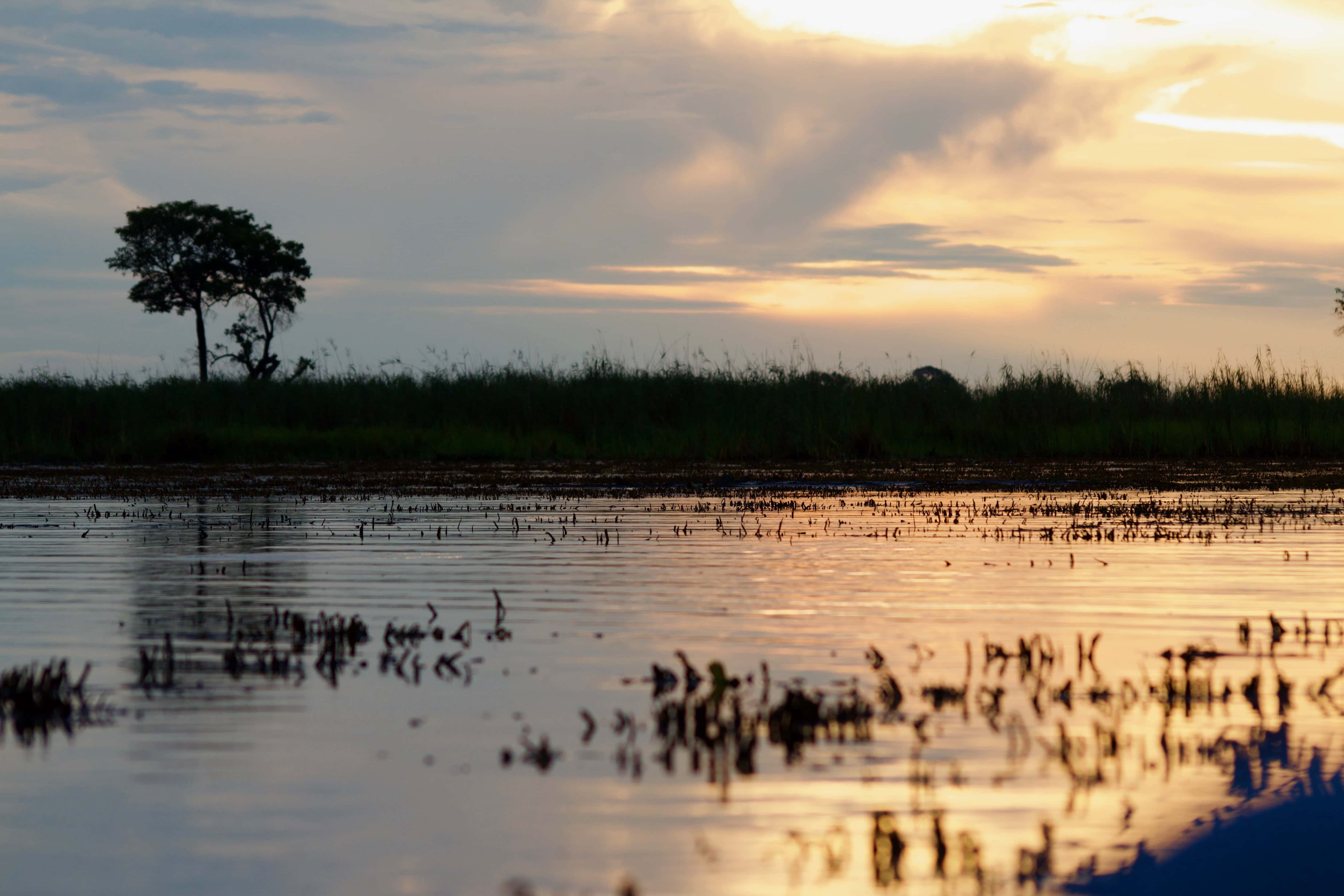 If you dream of roaming the plains of Africa and frolicking amongst nature then you need to organize yourself a safari trip right away. If you still need some convincing before you go ahead and book your seat on an African safari tour, and then read more about our 5 reasons why you should go explore the wilderness. Read more at thefivefoottraveler.com