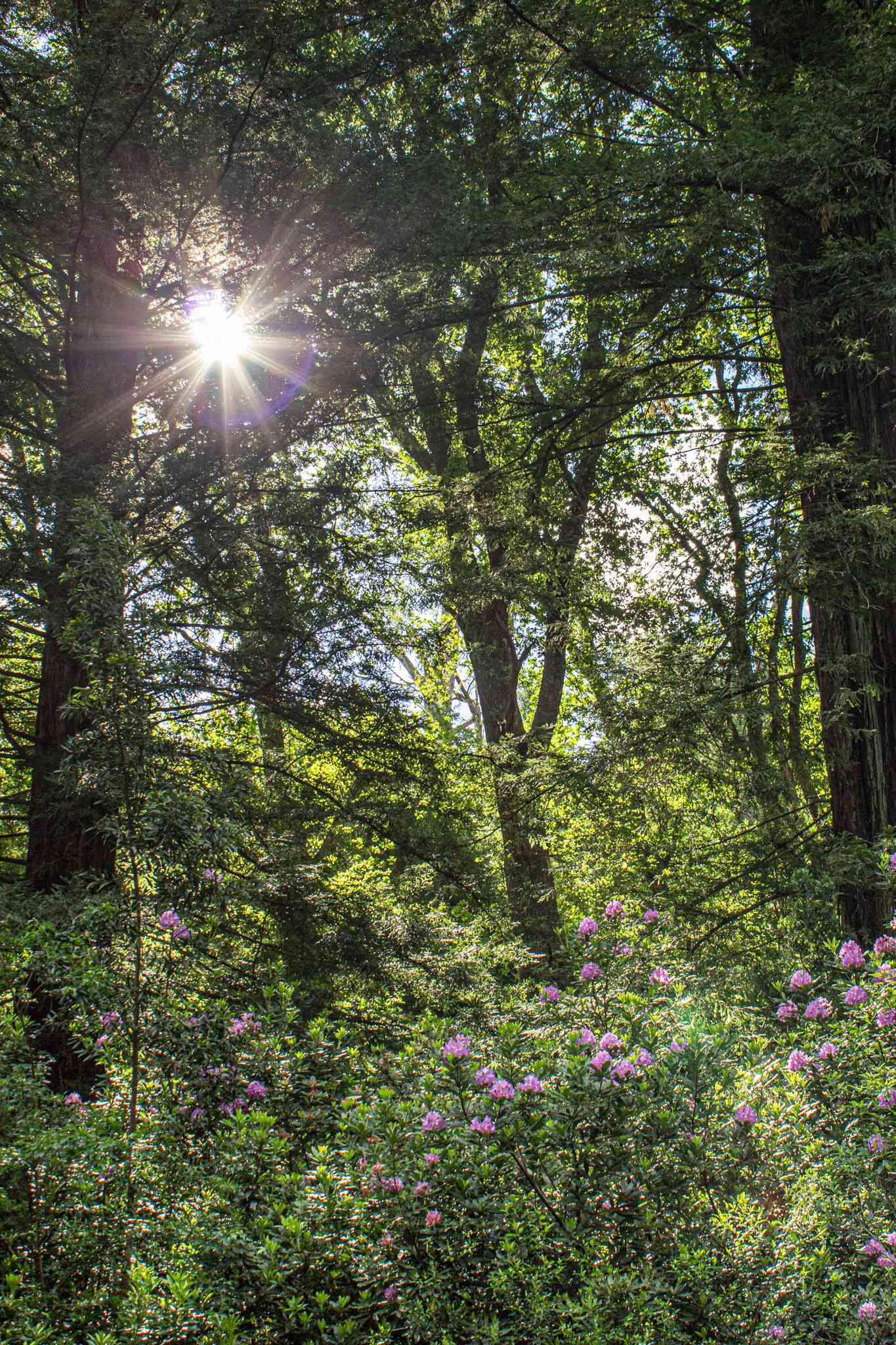a beautiful forest with purple flowers in the foreground and a sun bursting through the trees - south africa vacation