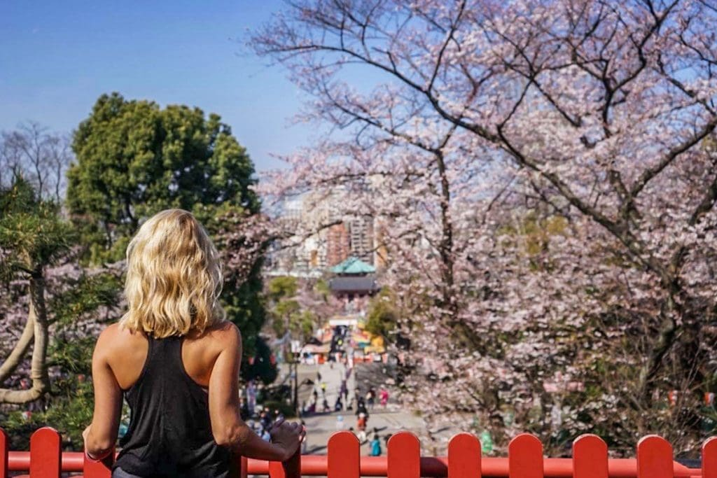 girl overlooks cherry blossoms in tokyo, japan