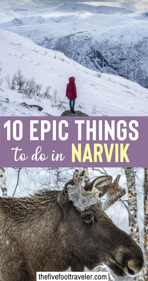 things to do in narvik