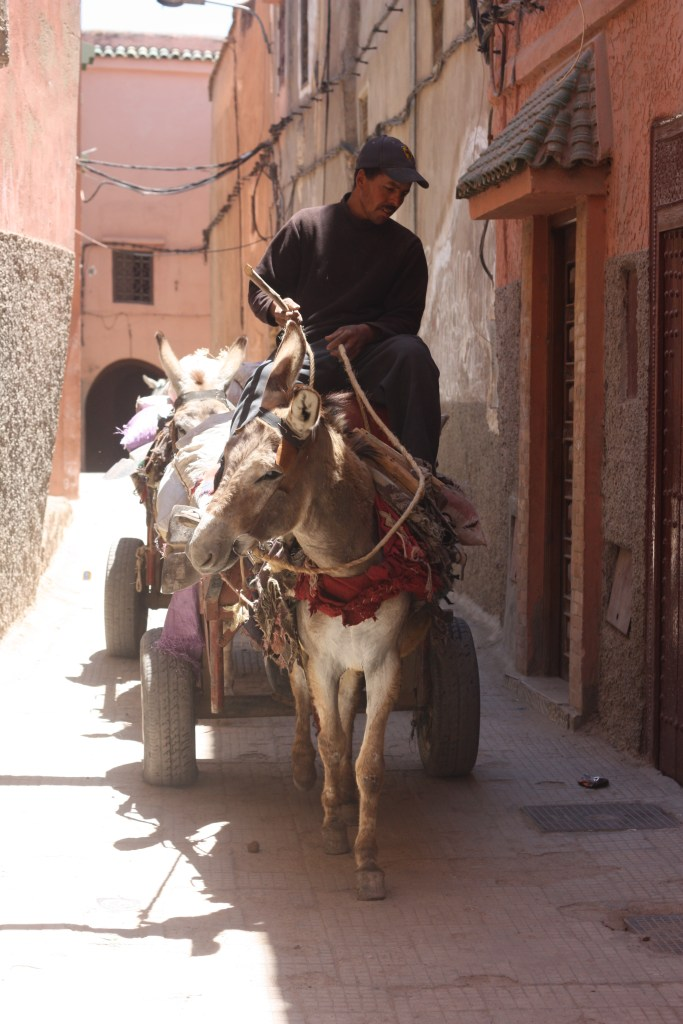 The alleyway just off the souk, en route to the riad; slightly different residents to those on the main drag