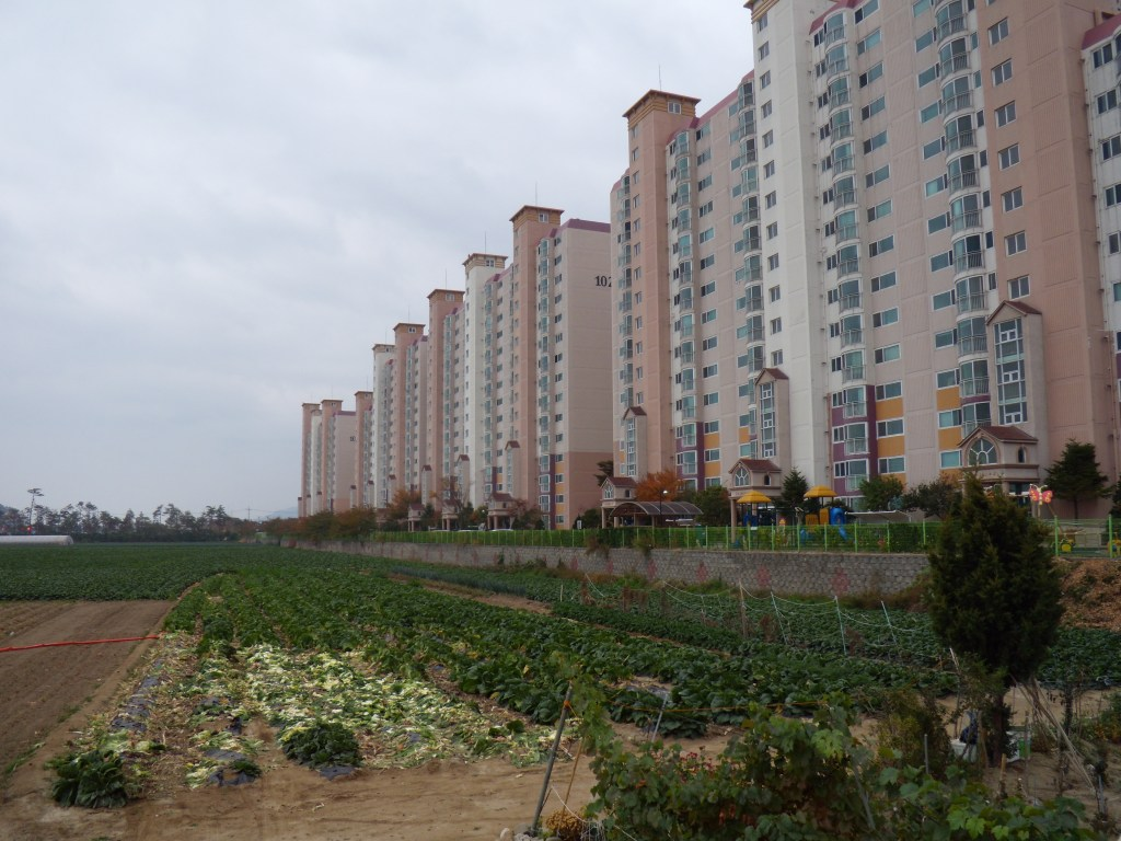 Gina's apartment complex, right next to a field of cabbages. The Korean demand for cabbages is intense